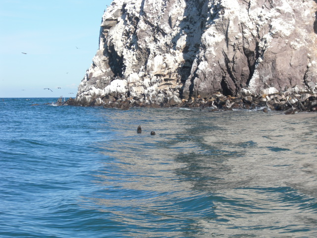Sea lions on Konsag Island San Felipe Baja Mexico