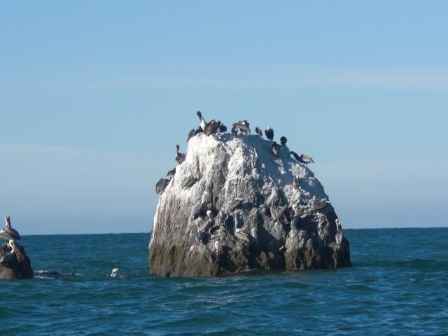 Birds on Konsag Island San Felipe Baja Mexico
