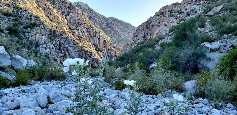 canyon del diablo San Felipe
