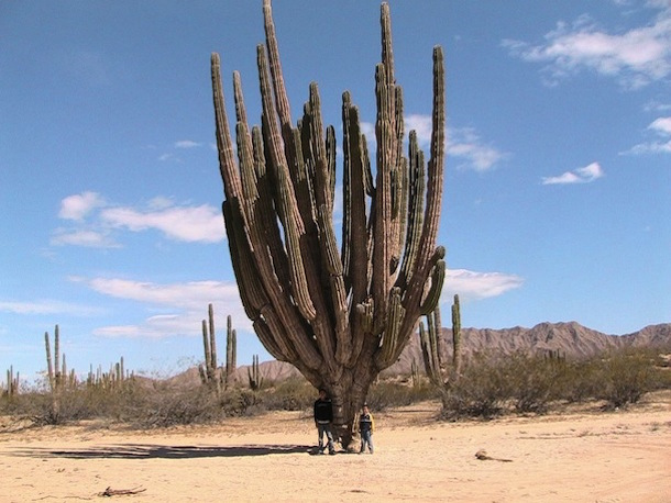 Giant Cactus Tour San Felipe