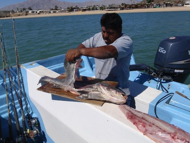 San Felipe fish cleaning
