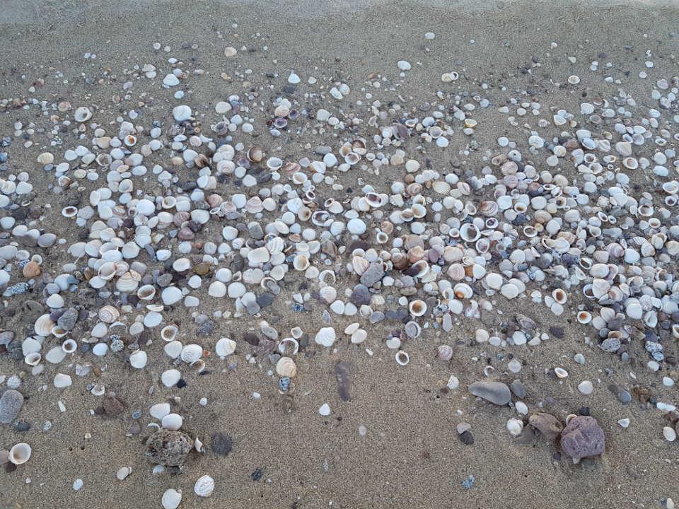 shells at shell beach San Felipe Baja